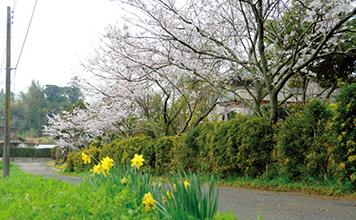 池田堤 ikedazutsumi