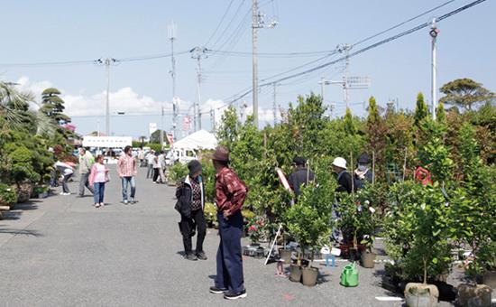匝瑳市植木まつり Sosacity Uekifestival
